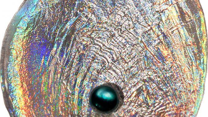 Palau 2012 5 Dollars Galiotis Iris Silver Coin