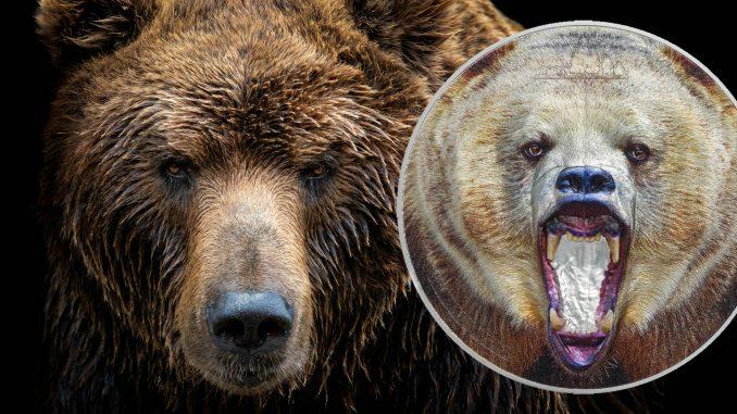 Tanzania 2020 1500 Francs American Grizzly Bear Silver Coin